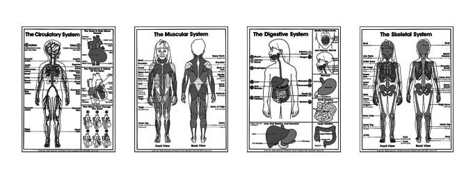 Grades 4-6 Anatomy Coloring Sheets