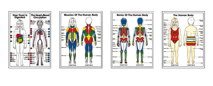 Kids Anatomy Posters Grades K To 3rd By Bruce Algra