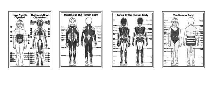 Grades K-3 Anatomy Coloring Sheets
