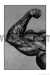 Arm Muscle Poster