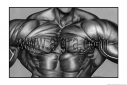 Chest Muscle Poster