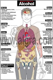 Harmful Effects of Alcohol Poster