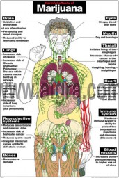 Harmful Effects of Marijuana Poster