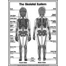 Skeletal System Coloring Sheets