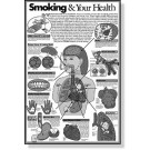 Smoking & Your Health Study Sheets