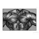 Chest Muscle Art