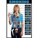 Effects of Smoking Poster
