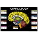 Marijuana and the Brain 8 1/2 x 11 Color Transparency