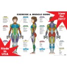 Female Exercise & Muscle Guide Poster