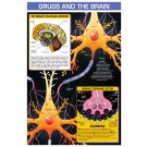 Drugs and the Brain
