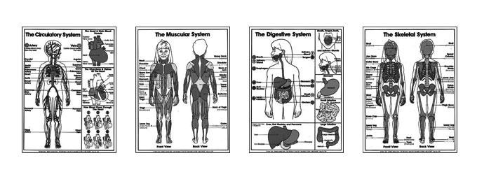 Grades 4-6 Anatomy Coloring Sheets