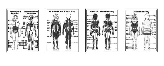 Grades K-3 Anatomy Coloring Sheets