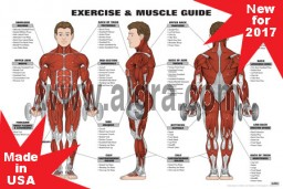 Exercise and muscle guide Male Red