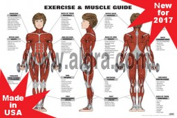 Female Exercise & Muscle Guide Poster 2017 RED