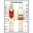 Child Body Poster