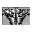 Back Muscle Poster