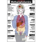 Harmful Effects of Methamphetamine Poster